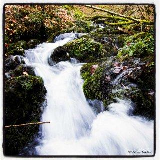 la foto del riu