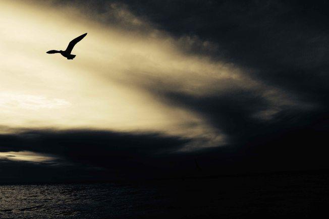 Alex Wigan. Unsplah